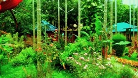 Chikmagalur resorts and homestays