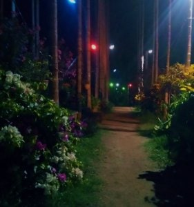 Chikmagalur resort night shot