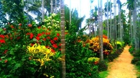 Chikmagalur resort garden path